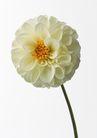 花卉造型0146,花卉造型,植物,