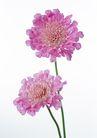 花卉造型0158,花卉造型,植物,粉色花卉