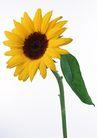 花卉造型0162,花卉造型,植物,充满朝气的花