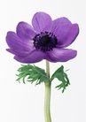 花卉造型0168,花卉造型,植物,一朵紫花