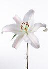 花卉造型0178,花卉造型,植物,