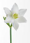 花卉造型0181,花卉造型,植物,素雅花朵