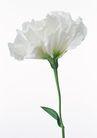 花卉造型0182,花卉造型,植物,白色花朵