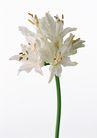 花卉造型0184,花卉造型,植物,花艺