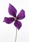 花卉造型0186,花卉造型,植物,紫色花朵