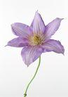 花卉造型0187,花卉造型,植物,花形