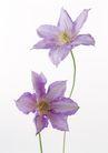 花卉造型0188,花卉造型,植物,花艺