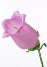 花卉造型0189,花卉造型,植物,灯笼状 粉红色