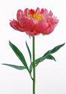 花卉造型0194,花卉造型,植物,挺直花枝