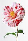 花卉造型0196,花卉造型,植物,一朵花儿