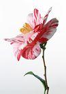 花卉造型0197,花卉造型,植物,花蕊