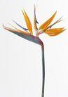 花卉造型0198,花卉造型,植物,精致花朵
