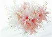 花的彩绘0157,花的彩绘,植物,美丽花儿