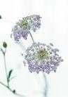 花的彩绘0160,花的彩绘,植物,碎花