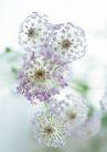花的彩绘0161,花的彩绘,植物,发射状花盘