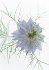 花的彩绘0162,花的彩绘,植物,特别的植物