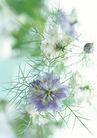 花的彩绘0164,花的彩绘,植物,针状花叶