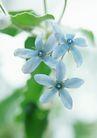 花的彩绘0166,花的彩绘,植物,几朵小花