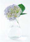 花的彩绘0170,花的彩绘,植物,淡色花球