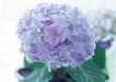 花的彩绘0172,花的彩绘,植物,幽香 远处 鲜艳