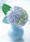 花的彩绘0173,花的彩绘,植物,