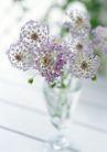花的彩绘0179,花的彩绘,植物,梧桐花 缝隙 风扇