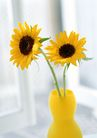 花的彩绘0182,花的彩绘,植物,鲜花 花瓶
