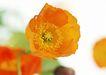 花的彩绘0183,花的彩绘,植物,花卉 植物
