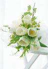 花的彩绘0187,花的彩绘,植物,白色花 素雅植物