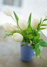 花的彩绘0189,花的彩绘,植物,鲜花 郁金香