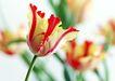 花的彩绘0192,花的彩绘,植物,特色花瓣