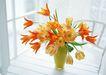 花的彩绘0195,花的彩绘,植物,花瓶
