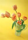 花的彩绘0197,花的彩绘,植物,郁金香