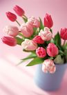 花的彩绘0198,花的彩绘,植物,红色郁金香