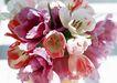 花的彩绘0200,花的彩绘,植物,彩色花朵