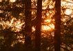 茂盛树木0145,茂盛树木,植物,