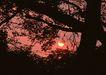 茂盛树木0146,茂盛树木,植物,