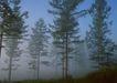 茂盛树木0148,茂盛树木,植物,