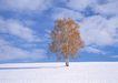 茂盛树木0151,茂盛树木,植物,孤树