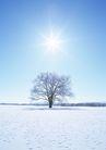 茂盛树木0159,茂盛树木,植物,雪地
