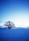 茂盛树木0160,茂盛树木,植物,树的百态