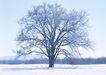 茂盛树木0161,茂盛树木,植物,茂密的树
