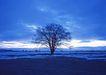 茂盛树木0163,茂盛树木,植物,树的特写