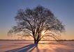 茂盛树木0165,茂盛树木,植物,霞光下的树