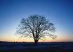 茂盛树木0168,茂盛树木,植物,仅有的一棵树