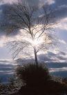 茂盛树木0169,茂盛树木,植物,阳光之下的树