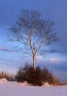 茂盛树木0170,茂盛树木,植物,繁茂树干