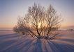 茂盛树木0173,茂盛树木,植物,一望无垠 雪白大地 空阔