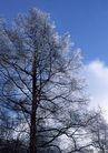 茂盛树木0175,茂盛树木,植物,松树 高耸 枝叶