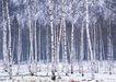 茂盛树木0183,茂盛树木,植物,树木 木材